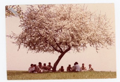 students sit under blooming tree